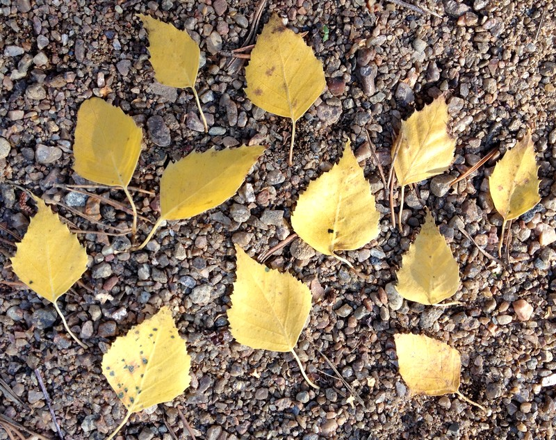 October Project: Capture Autumn